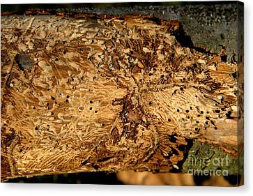 Canvas Print featuring the photograph Worm Wood - 2 by Kenny Glotfelty