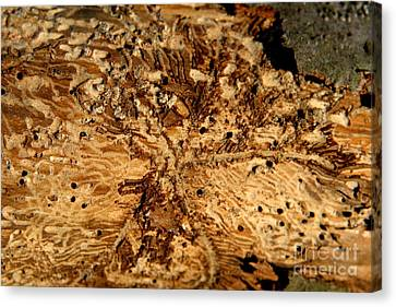 Canvas Print featuring the photograph Worm Wood - 3 by Kenny Glotfelty