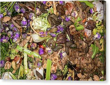 Worms And Slugs In A Compost Bin Canvas Print by David Parker