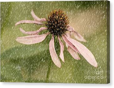 Wouldn't It Be Loverly Canvas Print by Lois Bryan