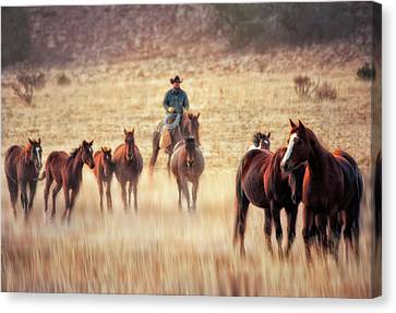 Wrangler And Horses On Ranch In New Canvas Print by Sheila Haddad