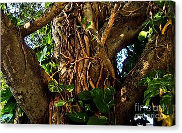 Wrapped In Vines Canvas Print by Claudette Bujold-Poirier
