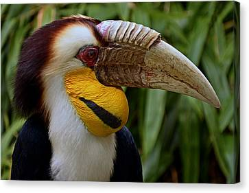 Wreathed Hornbill Canvas Print by Eric Albright