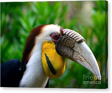 Canvas Print featuring the photograph Wreathed Hornbill by Lisa L Silva