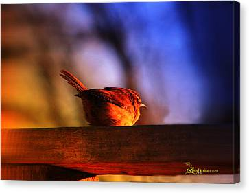 Wren In Early Morning's Light - Featured In In Newbies-nature Wildlife- Comfortable Art Groups Canvas Print by EricaMaxine  Price