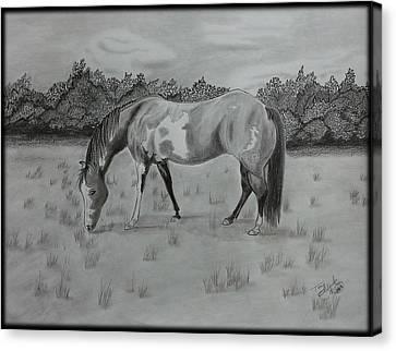 Wyatt Canvas Print by Tony Clark