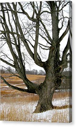 Wyeth Country Canvas Print by Gordon Beck