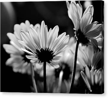 X-ray Flowers Canvas Print