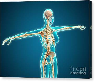 X-ray View Of Female Body Showing Canvas Print by Stocktrek Images