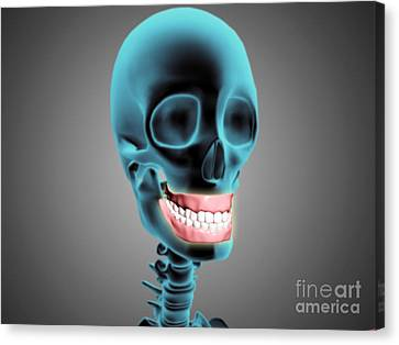 X-ray View Of Human Skeleton Showing Canvas Print by Stocktrek Images
