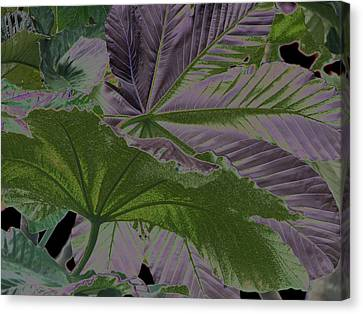 Canvas Print featuring the photograph Yagrumo by Aurora Levins Morales