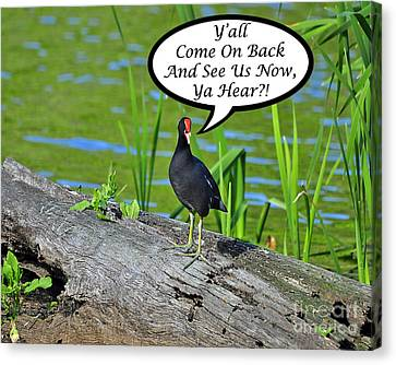 Y'all Come Back Moorhen Card Canvas Print by Al Powell Photography USA