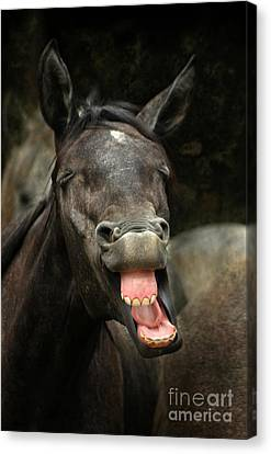 Bay Horse Canvas Print - Yawn by Angel  Tarantella