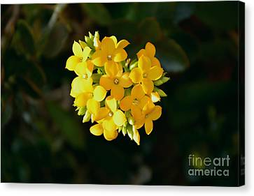 Canvas Print featuring the photograph Yellow Allegria  by Ramona Matei