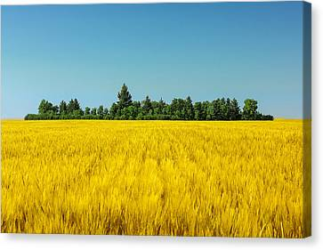 Yellow And Blue Make Green Canvas Print