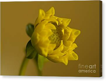 Yellow And Green Canvas Print by Nick  Boren
