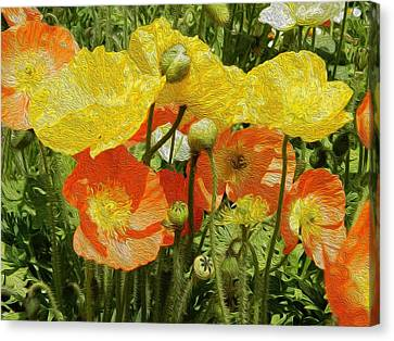 Yellow And Orange Poppies Canvas Print by Dee Meyer