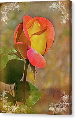 Yellow And Peach Rosebud II Canvas Print by Debbie Portwood