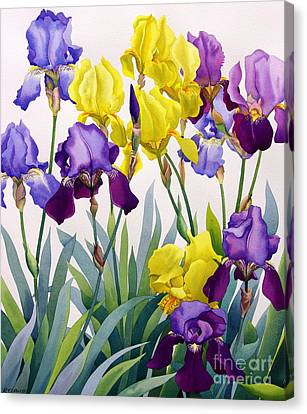 Yellow And Purple Irises Canvas Print
