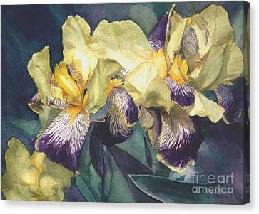 Watercolor Of A Tall Bearded Iris Painted In Yellow With Purple Veins Canvas Print