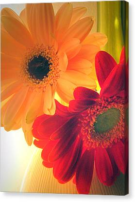 Yellow And Red Gerberas Canvas Print