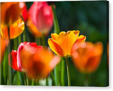 Canvas Print featuring the photograph Yellow And Red by Trevor Chriss
