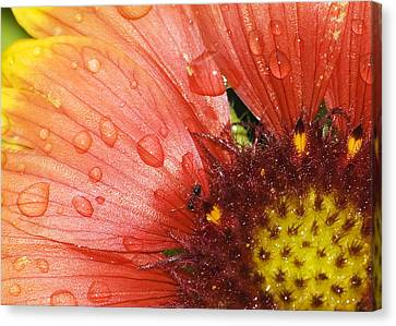 Canvas Print featuring the photograph Yellow And Red With Ant by Robert Culver