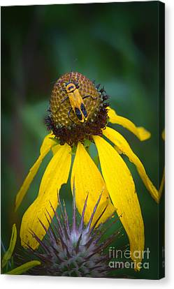 Yellow And Yellow Canvas Print by Todd Bielby