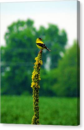 Yellow Canvas Print by Andrea Dale