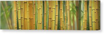 Yellow Bamboo Scape Canvas Print