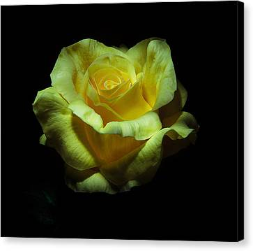 Yellow Beauty Canvas Print by Cecil Fuselier