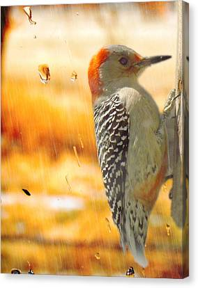Yellow-bellied Woodpecker Canvas Print by Shannon Story
