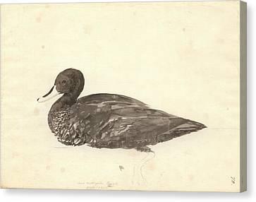 Yellow-billed Duck Canvas Print