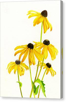 Yellow Black Eyed Susans Canvas Print by Sharon Freeman