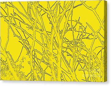 Yellow Branches Canvas Print by Carol Lynch