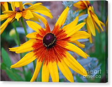 Canvas Print featuring the photograph Yellow Burst by Allen Beatty