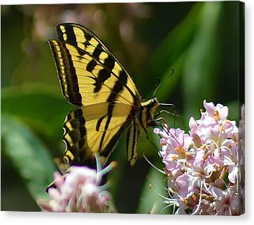 Yellow Butterfly Canvas Print by Camille Lopez