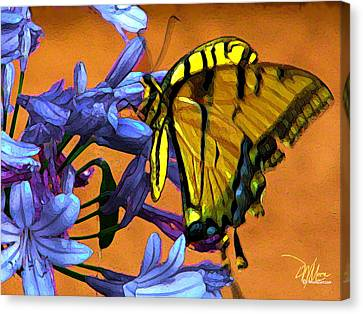Yellow Butterfly On Agapanthus Canvas Print by Douglas MooreZart