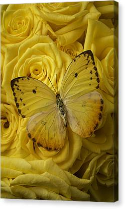 Yellow Butterfly Canvas Print - Yellow Butterfly On Yellow Roses by Garry Gay