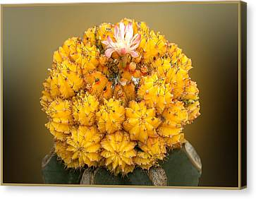 Canvas Print featuring the photograph Yellow Cactus by Geraldine Alexander