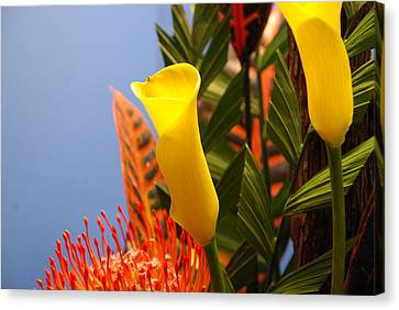 Canvas Print featuring the photograph Yellow Calla Lilies by Jennifer Ancker