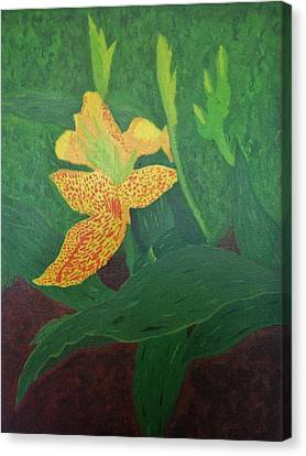 Yellow Canna Lily Canvas Print by Zack Winchester