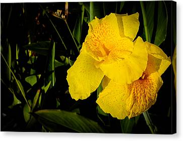 Yellow Canna Singapore Flower Canvas Print by Donald Chen