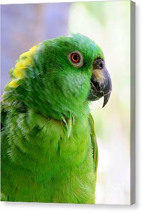 Yellow Crowned Amazon Parrot No 1 Canvas Print by Mary Deal