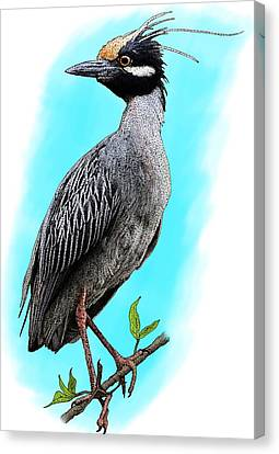 Yellow Crowned Heron Canvas Print