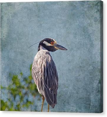 Yellow Crowned Night Heron Canvas Print by Kim Hojnacki