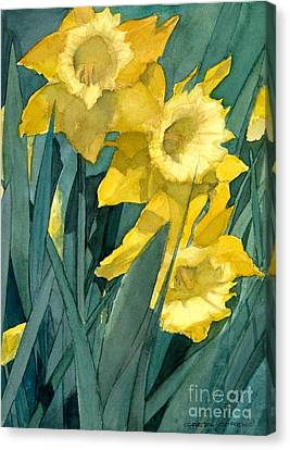 Watercolor Painting Of Blooming Yellow Daffodils Canvas Print