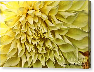 Yellow Dahlia Canvas Print by Laurinda Bowling