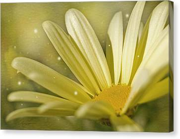 Canvas Print featuring the photograph Yellow Daisy by Ann Lauwers