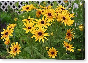 Yellow Daisy Flowers #2 Canvas Print